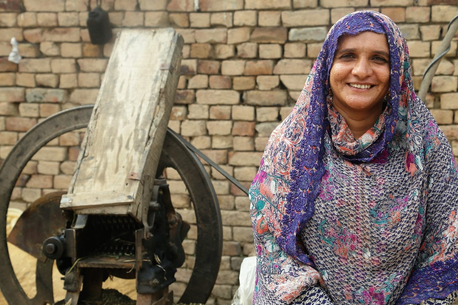 Enhancing women's income through dairy interventions in Pakistan