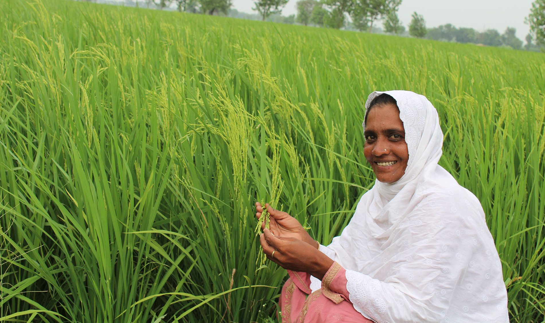 Pakistan partnerships in inclusive seed systems