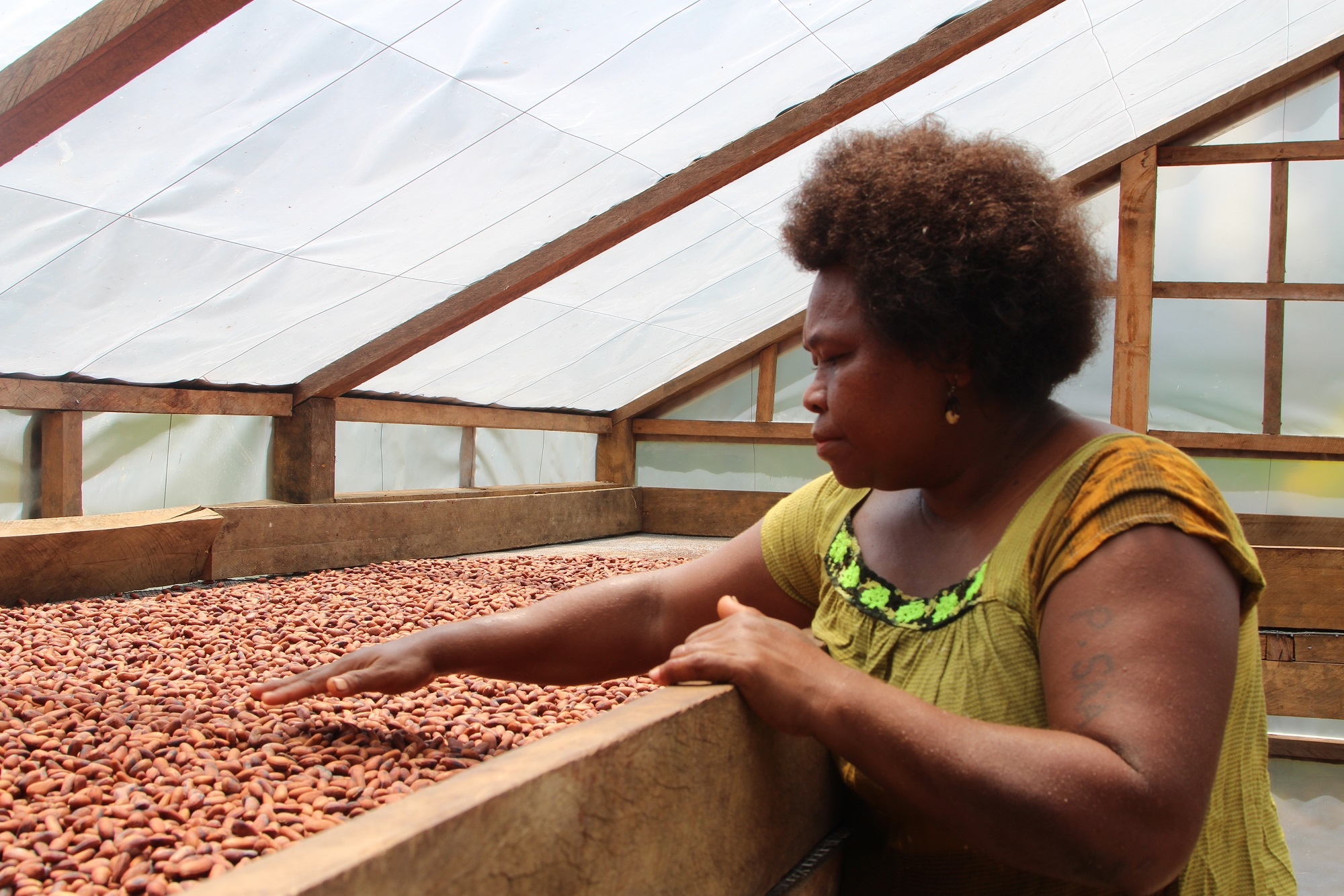 Organic cocoa production in Solomon Islands