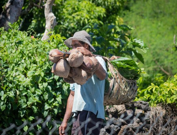 Partnership Profile: Cracking the coconut in Samoa