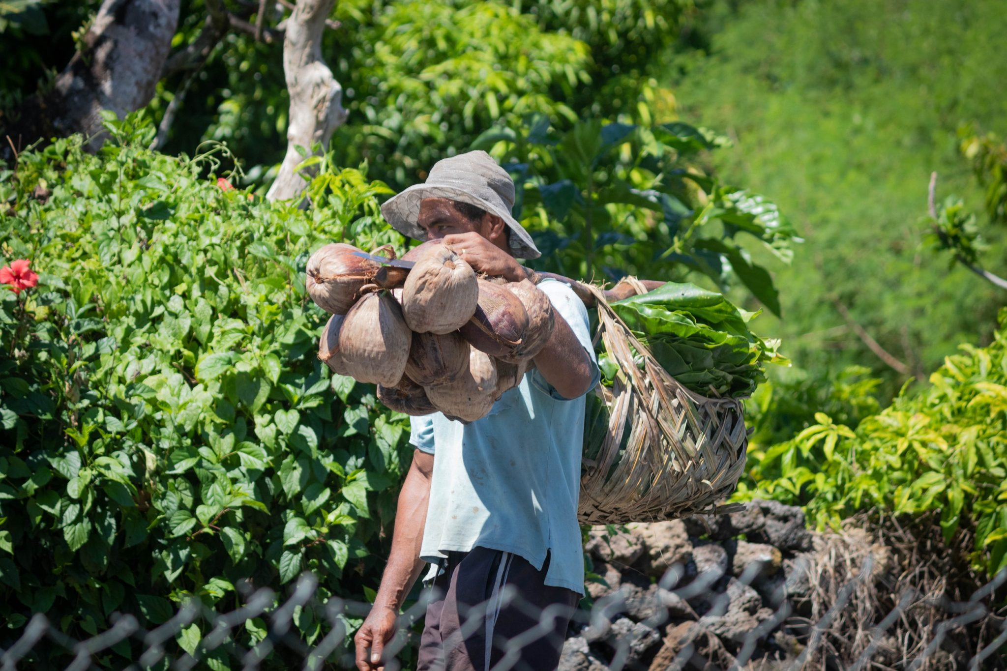 Partnership Profile: Cracking the coconut in Samoa